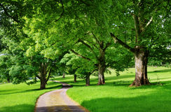 Narrow road running through an avenue of trees Royalty Free Stock Photo