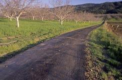 A narrow road runs beside an Spring orchard near Ojai, California Stock Photos