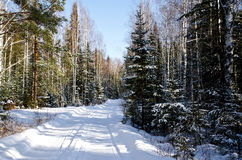 Narrow road in the winter forest Royalty Free Stock Images