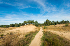 Narrow sandy path in a large nature reserve Stock Images