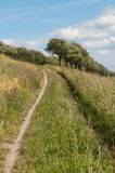 Narrow sandy path upwards. In the tall grass a narrow sandy path leads up to the trees Royalty Free Stock Photos