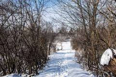 Narrow snow path at the exit of the forest stock photo