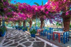 Narrow stenlade gatan mycket av färgrika blommor i Sisi, Kreta arkivfoton