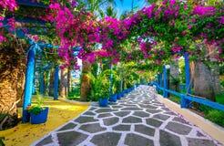 Narrow stenlade gatan mycket av färgrika blommor i Sisi, Kreta royaltyfri foto