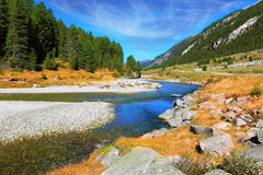 The narrow stream. Headwaters Krimml waterfalls. Autumn creek shallow. Austrian Alps. The narrow stream flows between fields and pine forests Royalty Free Stock Photo