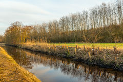 Narrow stream with reflective water surface in a rural area. Narrow stream with a reflective mirror smooth water surface in a rural area. On the banks are sawn royalty free stock photo