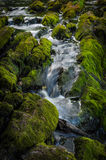 Narrow stream of waterfall Royalty Free Stock Images