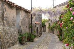Narrow street of flowers Stock Photography