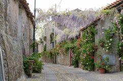 Narrow street of flowers Stock Image