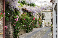 Narrow street of flowers Royalty Free Stock Photos