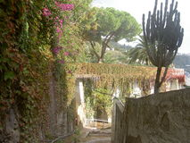 Narrow street with overgrown blooming wall Royalty Free Stock Photography