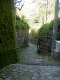 Narrow street with overgrown wall Stock Images