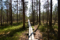 Narrow trail of planks leading to Viru Raba bog in Estonia in a pines forest Stock Photo