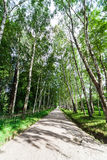 Narrow walking path Royalty Free Stock Image