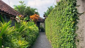 Patio which immersed in greenery on asian villa in Vietnam. Narrow walkway between green plants and hedge on villa on the cloudy sky background in Udud in Bali stock footage