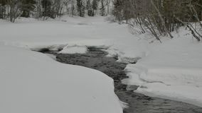 Narrow water stream flows between clumps of white snow. Clear narrow water stream makes way between clumps of white snow in forest with thin bare trees stock footage