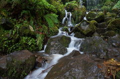 Narrow white stream of water flows between wet stones Stock Image