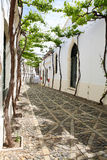 Narrow white street of Spanish Andalusia. Old vine in the narrow white street of Spanish Andalusia Royalty Free Stock Photo