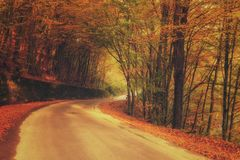 Autumn sunny forest road, nature landscape, vintage style Royalty Free Stock Photography