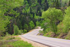 Narrow, winding road entering forest stock image