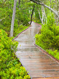 Narrow wooden path in the forest Stock Photo