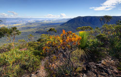 Narrowneck To Nellies Glen And Megalong Valley Royalty Free Stock Photos