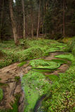 Narrows dry stream along in forest Royalty Free Stock Image