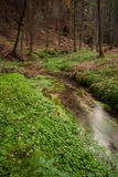 Narrows stream flowing along in forest Stock Image