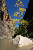 The Narrows trail in Zion National Park Stock Image
