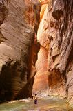 The Narrows of Zion royalty free stock images