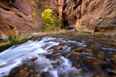 Narrows of Zion Canyon Stock Image