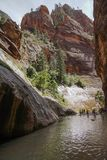 Narrows of zion canyon national park in summer royalty free stock images