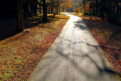 Narrrow Country Forest Road in the Fall royalty free stock photos