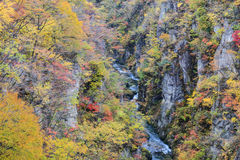 Naruko Gorge Autumn leaves in the fall season, Japan Stock Images