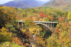 Naruko Gorge Autumn leaves in the fall season, Japan Stock Photography