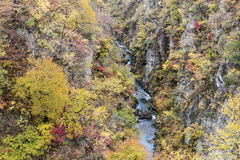 Naruko Gorge Autumn leaves in the fall season, Japan Stock Image