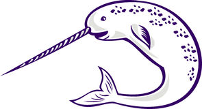 Narwhal Monodon monoceros unicorn whale Stock Images