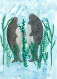 Narwhals独角兽鱼 库存图片