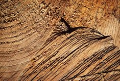 Narysy na drewnianym felling obrazy royalty free