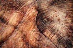 Narysy na piłowania drewnie obrazy royalty free