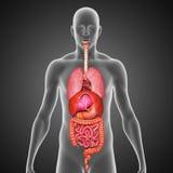 narządów ludzkich royalty ilustracja