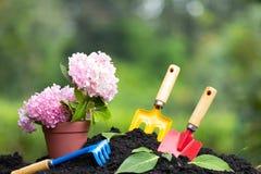 Narzędzie ogródu hortensja i ziemia kwitniemy w kwiatu garnku nad natura Obraz Stock