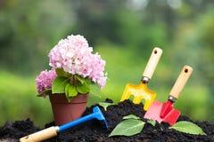Narzędzie ogródu hortensja i ziemia kwitniemy w kwiatu garnku nad natura Fotografia Royalty Free