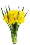Narzisse-Blumen lizenzfreies stockfoto