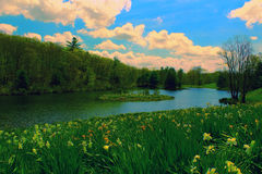 Narzissen-Feld und Fluss Stockfotos