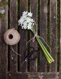 Narzissen gebunden mit Schnur, mit Gartenschnur und Scheren lizenzfreies stockfoto