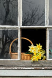 Narzissen im Fenster Lizenzfreies Stockfoto
