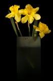 Narzissen im hohen Vase Stockfotos