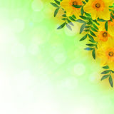 Narzissen und Blätter stock abbildung