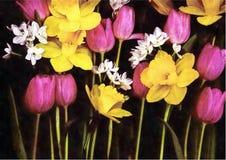Narzissen und Tulpen auf schwarzem Segeltuchhintergrund Stockbild